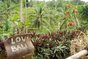 Ubud: Beautiful Traditional-Modern Coherency 5